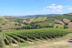 Sartarelli Winery