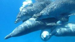 Delfine-Joseph Mogli's Freunde