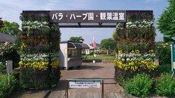 Moriyama Rose, Herb Garden