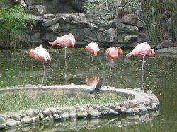 Parque Zoologico y Botanico Bararida