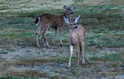 Fawns adjacent to the parking lot