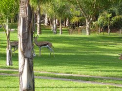Springbokkies on the lawn