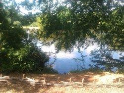 Danbury Country Park