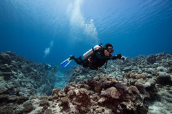 Buccaneer Adventures Niue Dive