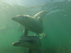 Baird Bay Ocean Eco Experience
