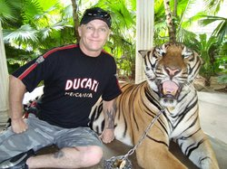 Photo with a Tiger,, theyre bloody big