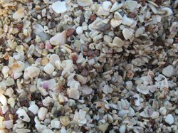 Sand made of shells
