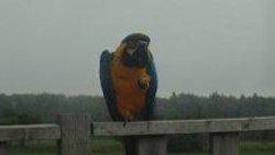 bird at orchard village