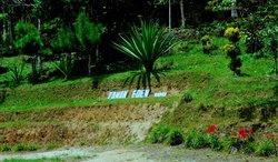 Taman Eden 100