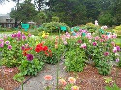 Shore Acres Rose Garden