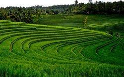 Bali Activities - Cruise Arrangement