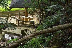 Kannna Yoriage Green Forest Park