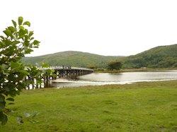 Mawddach Valley - Arthog Bog
