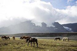 Eldhestar Volcano Horses