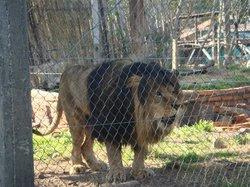 Zoo de la Ciudad de Salto