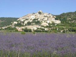 Provence Lavender Tour