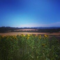 Craigie's Farm