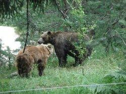 Dancing Bears Park