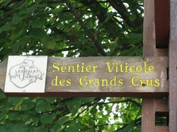 Sentier Viticole des Grands Crus