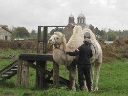 Gorki Zoo