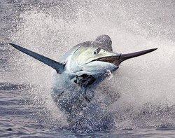 Upper Keys Sportfishing
