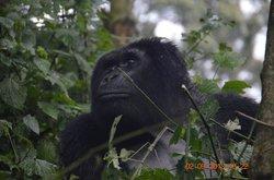 Gorilla Trek right down the road