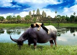 Cambodia Angkor Jungle Private Tour