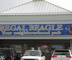 Regal Beagle Macleod