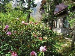 Gakujin No Mori Teahouse Shikoku Botanical Park
