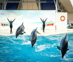 Dolphinarium Koktebel
