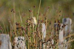 La Réserve Naturelle Régionale du Scamandre