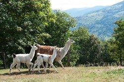 La Montagnes des Lamas