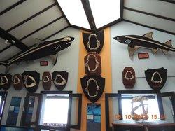 Museu do Tubarao Restaurant