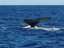 Sea Watch Tours