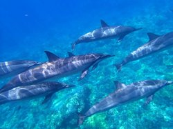 Dolphin Journeys - Day Tours