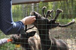 Kolkunovo Zoo-Circus