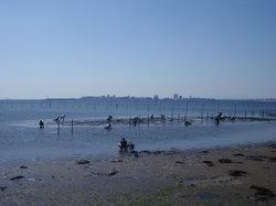 Funabashi Sanbanze Ocean Park