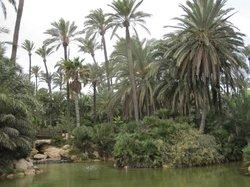 Parque El Palmeral
