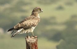 Tarifa Birding Tours