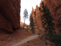 Loved the view of these douglas firs along the Navajo Trail