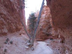 View along Navajo Trail