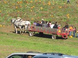 Olson Farms