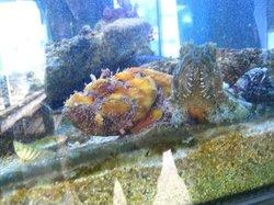"""Aquarium """"Laguna di Nora"""""""