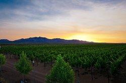 Flying Leap Vineyards