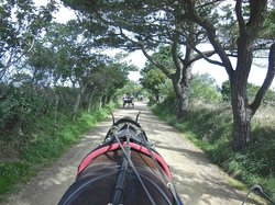 Sark Carriages