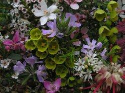 Karwarra Australian Plant Garden