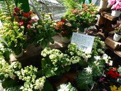 三春ハーブ花ガーデン
