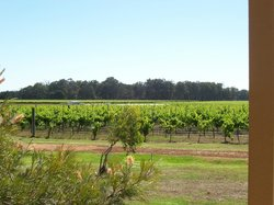 view from the cottage over looking the vines