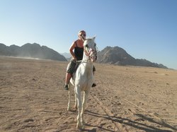 Sharm Iraqi Horse Riding