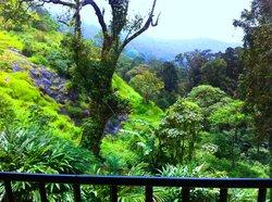view from balconya